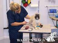 WASH N' WAGS - Pet Grooming and Self Wash, Walk-In Nail Trims, Daycare & Boarding in Grand Rapids Michigan